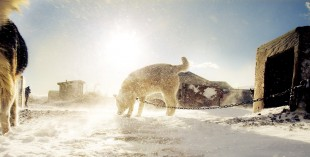 02_Mammoth_Dogsled_619RE copy